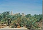Het orakel van de Siwa-oase